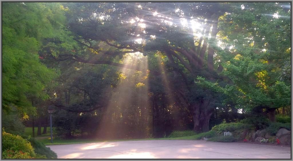 Oak tree and sunlight framed photo