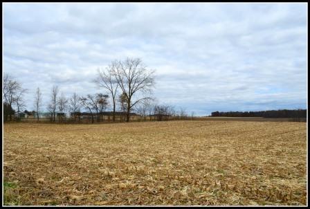 Martz Farm - Field and Woods