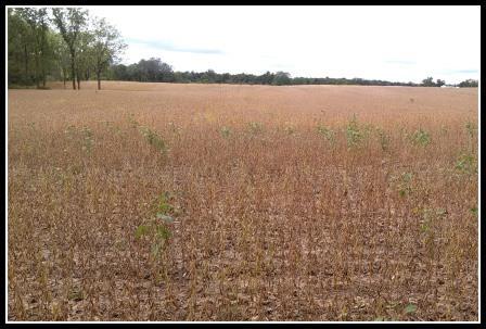 Martz Farm - Field