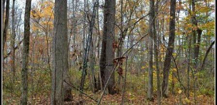 Martz Farm - Woods