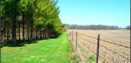 Straub Farm - Fence Line