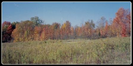 Straub Farm - Meadow and Trees