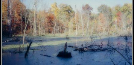 Straub Farm - Pond