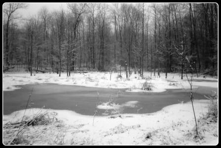 Straub Farm - Winter Pond