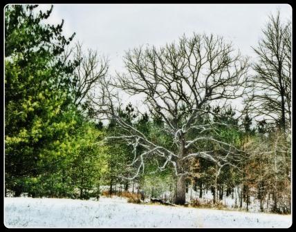 Straub Farm - Winter Trees 01